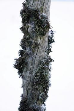 4-DSC02317-001 – Kopio
